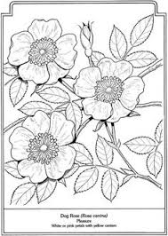 flower printable coloring sheets flower