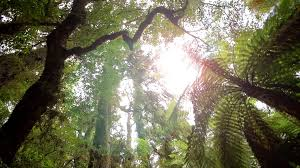 Under Canopy Rainforest by Tracking Underneath Forest Canopy Free Stock Video Footage