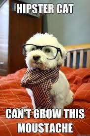 Hipster Kitty Meme - hipster dog memes quickmeme