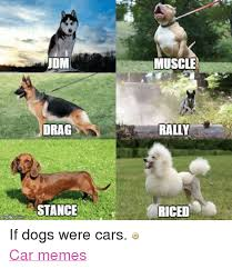 Dog In Car Meme - udm drag stance imafkpcom muscle rally riced if dogs were cars car