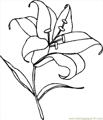 lily coloring pages flowers printable coloring pages coloringzoom