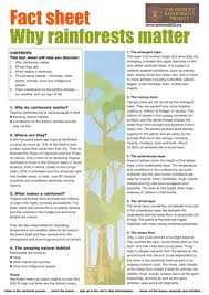 rainforest by claire494 teaching resources tes