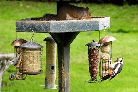 file a busy birdfeeder 7355182424 jpg wikimedia commons