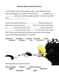 food chain worksheet about banana spider with clip by kez1611