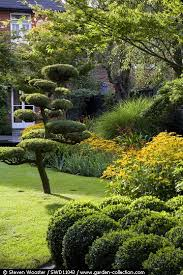 Topiary Cloud Trees - cloud pruned pinus sylvestris topiaires pinterest cloud