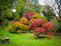 choosing the right ornamental tree johnstown garden centre