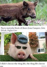 Funny Pig Memes - funny animals pig photos pictures lol funny pig memes
