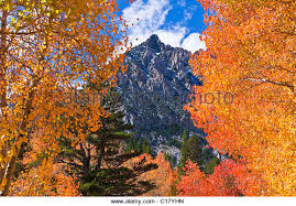 sierra fall color stock photos u0026 sierra fall color stock images