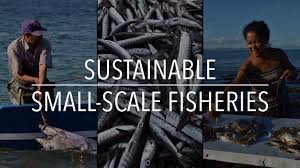 the future of sustainable seafood is from dock to dish by trevor