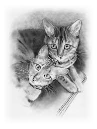 bengal cats pencil drawing two cats friends couple cute