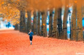 32 cosy photos of autumn in london