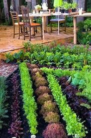 Small Vegetable Garden Design Ideas Vegetables Garden Design Hydraz Club