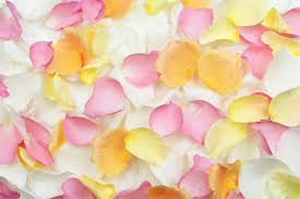 fresh petals abstract background of fresh scattered petals stock photo