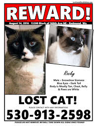 Missing Cat Meme - missing cat redmond wa lost found pets wa state