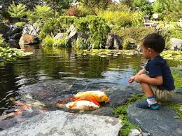 How To Make A Koi Pond In Your Backyard 9 Best Outdoor Space Images On Pinterest Backyard Ideas