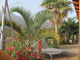Cateracterum Palm by Cat And House Sitter Needed In La Palma Canary Island Santa