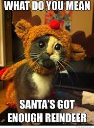 Mean Cat Memes - crushed dream kitty meme weknowmemes