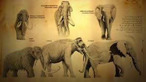 woolly mammoth columbian mammoth african elephant