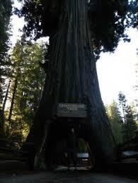 Tree Chandelier Chandelier Tree U2013 Leggett California Atlas Obscura