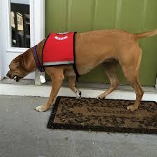 kctv5 investigates service dog deception kctv5