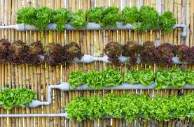 Vertical Gardening by Vertical Garden Images U0026 Stock Pictures Royalty Free Vertical