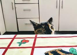 cat furniture free picture pet domestic cat furniture room kitchen curious