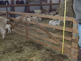 sheep barn interior design wooden panels cornell small farms