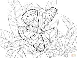 red admiral coloring page free printable coloring pages