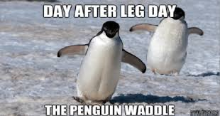 Cute Penguin Meme - 15 down right hilarious penguin memes i can has cheezburger