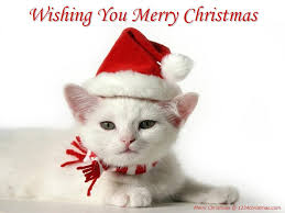 cat christmas cat wallpaper merry christmas best wallpaper
