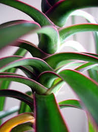 Air Purifying Plants 9 Air by 10 Best Houseplants To De Stress Your Home And Purify The Air