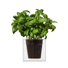 boskke clear cube self watering planter the green head