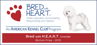 bichon frise therapy dog akc bichon frise puppies bichon frise breeder in illinois home