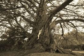 84 best california natives images treegirl blog treegirl intimacy with nature