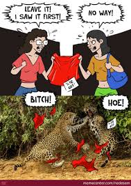 Cat Fight Meme - catfight memes best collection of funny catfight pictures