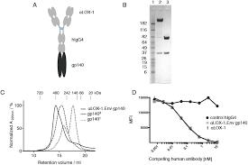targeting hiv 1 env gp140 to lox 1 elicits immune responses in