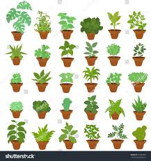 large houseplants collection indoor plants large set houseplants stock vector