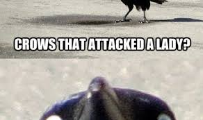 Crow Meme - funny memes comics at funnyand com the best funny memes page 570