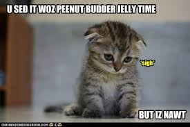 Peanut Butter Meme - lolcats peanut butter jelly time lol at funny cat memes funny