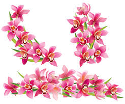 pink orchids pink orchids design vector 02 vector flower free