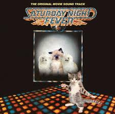 cat photo album cats recreate album covers 33 pics we rule the
