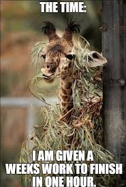 Giraffe Meme - office works memes funnyanimalmemes created with funny pictures of