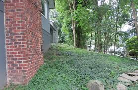 Backyard Ground Cover Options Diy Welcome To The Enclave U2013 The Home Tome