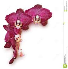 burgundy flowers burgundy orchid flowers stock photo image 54012530