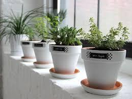 window herb harden modern white minimalist easy windowsill herb garden planters