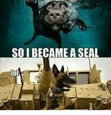 Gay Seal Meme Generator - 25 best memes about memes memes meme generator