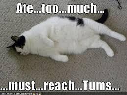 Food Coma Meme - turkey day tips lil miss fitness freak