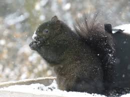 deer archives northstarnature