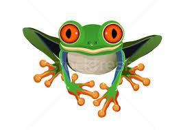 eyed tree frog vector illustration olgayakovenko 301112
