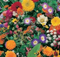 roll out flower garden garden innovations gf1000 10 inch by 10 foot roll out